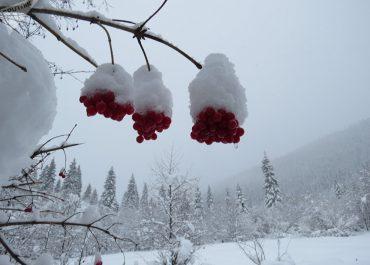 ზამთრის ხილი - რომელი უნდა მიირთვათ სიფრთხილით