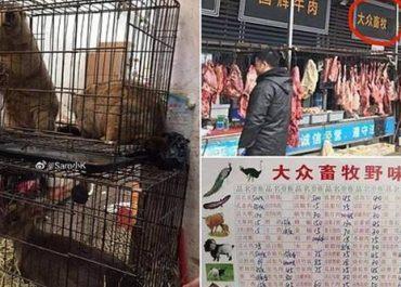 საქართველომ ჩინეთიდან მხოლოდ ცოცხალი ცხოველის იმპორტი აკრძალა