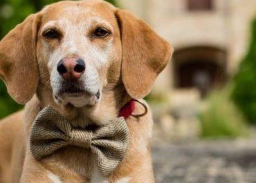 როგორ იხსნა ძაღლმა პატრონი კორონავირუსისგან