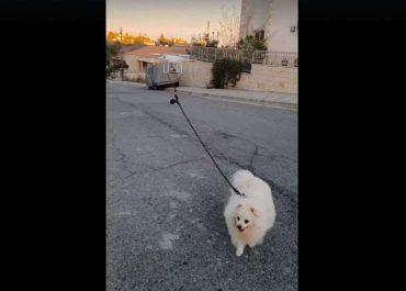 (ვიდეო) - კვიპროსში პატრონი ძაღლს დრონით ასეირნებს