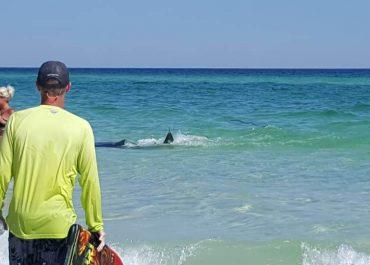 ფლორიდის სანაპირო კორონავირუსის მიუხედავად ხალხითაა სავსე - ვიდეო