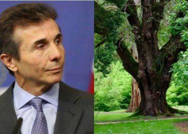 """""""დენდროლოგიურ პარკში ერთ ხეს უცვნია პატრონი - შე დედა მო…"""""""