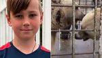 11 წლის ბიჭი ზოოპარკში ორმა დათვმა მოკლა – რა მოხდა ქალაქ სოჭში?