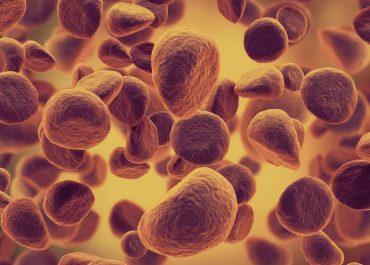 აშშ-ში მეცნიერებმა აღმოაჩინეს ცილა, რომელიც ანადგურებს  კორონავირუსს