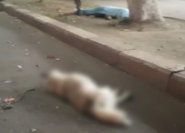 (ვიდეო) საზარელი კადრები! – 16 წლის გოგო ძაღლთან ერთად ადგილზე დაიღუპა