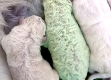(ვიდეო) – დაიბადა მწვანე ლეკვი – მას ფისტა დაარქვეს